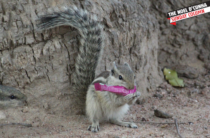 The Squirrel Association of India strongly advocates extended producers responsibility (EPR)